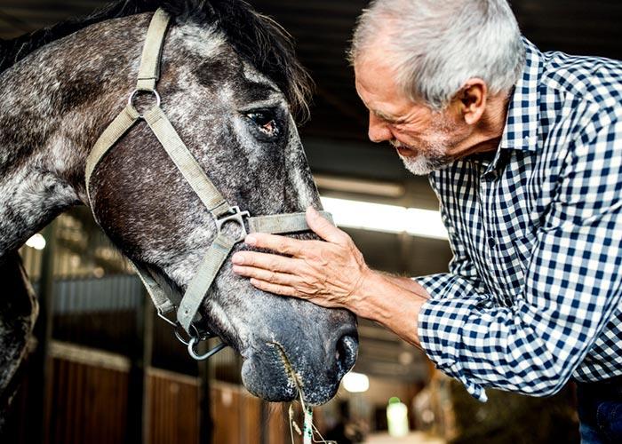 Pension pour chevaux à la retraite à Longessaigne près de Tarare et Feurs entre Rhône et Loire