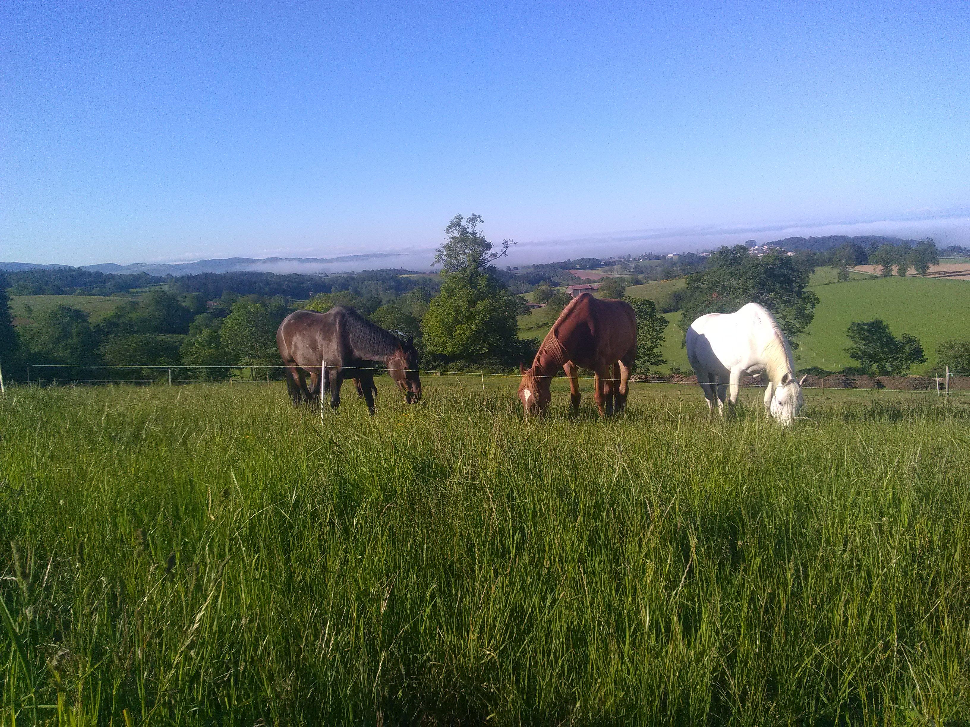 Pension pour chevaux classique à Longessaigne près de Tarare et Feurs entre Rhône et Loire